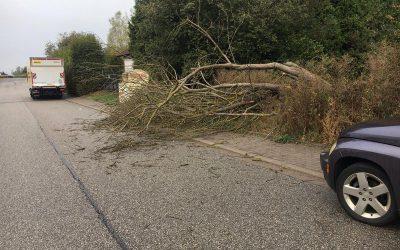259 – 01.10.2019 – Baum auf  Straßenseite – Ramstein